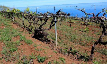 El valor de un buen vino de Tenerife