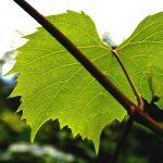 Sabías que…España es el 3º productor de vino a nivel mundial